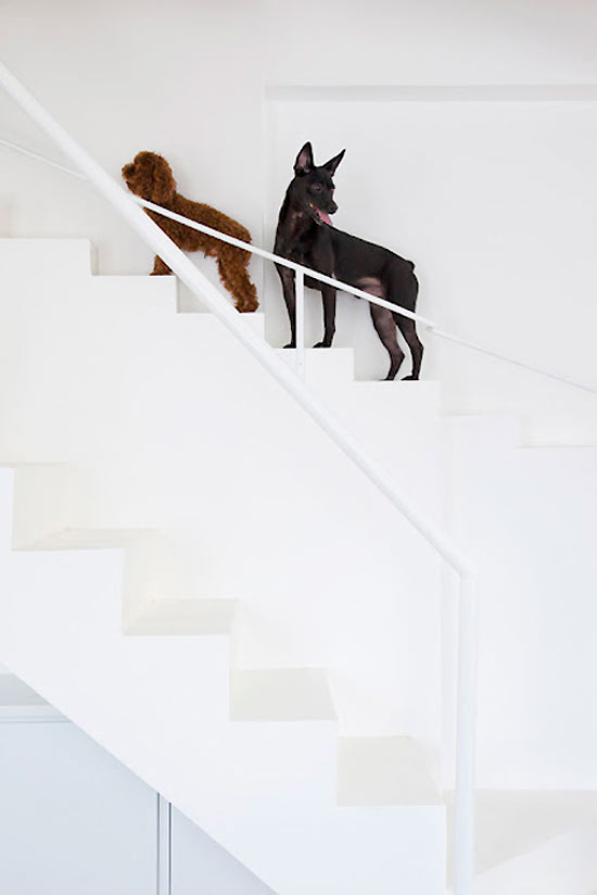 dogs staircase 2 Better No Interior, Then No Dogs In Da House