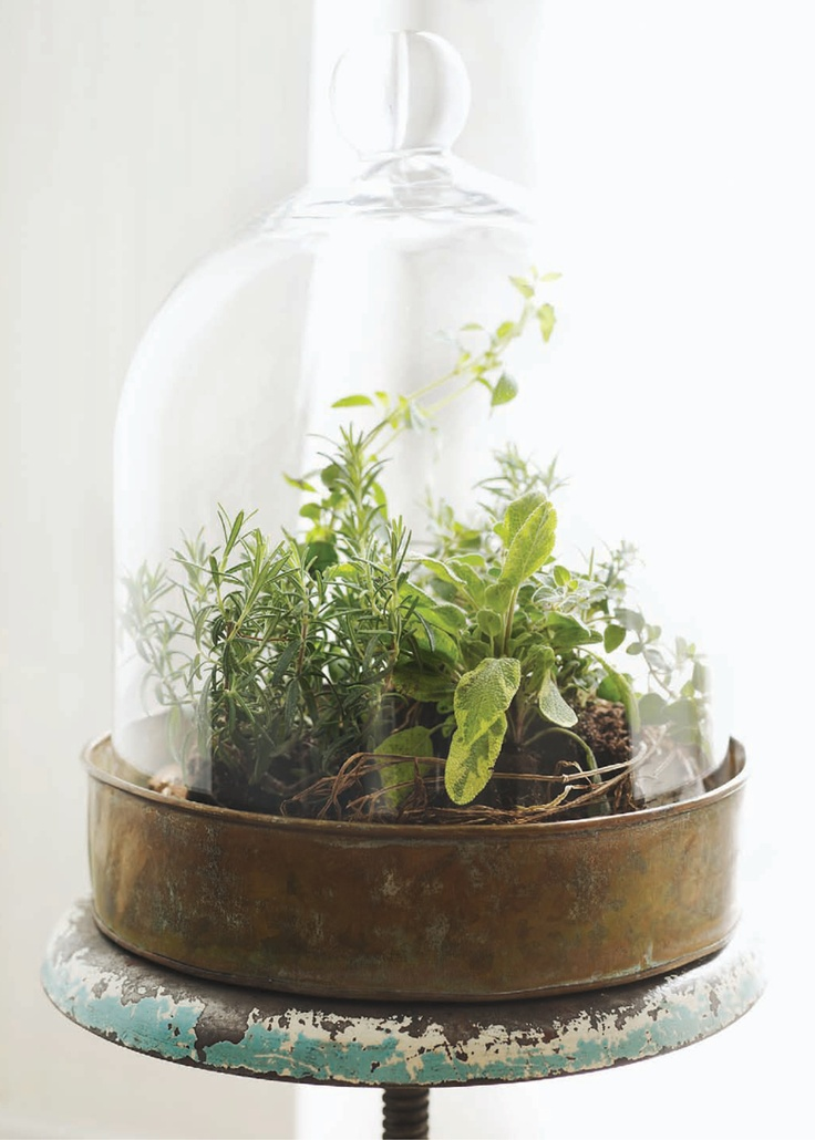 Herb Terrarium Herb Terarium 25 Indoor Garden Ideas