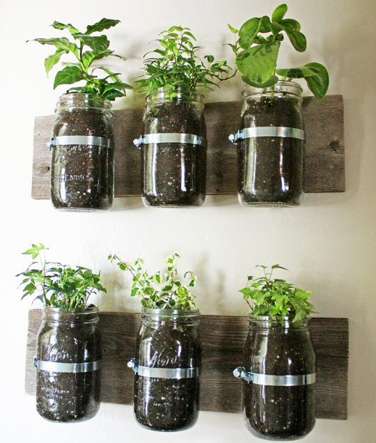 jars mounted to the wall 25 Indoor Garden Ideas