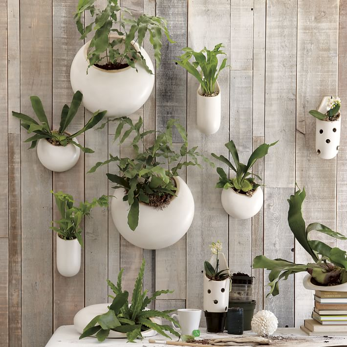 Indoor Hanging Garden Ideas Part - 27: Shane Powers Ceramic Wall Planters Shane Powers Ceramic Wall Planters 25 Indoor  Garden Ideas