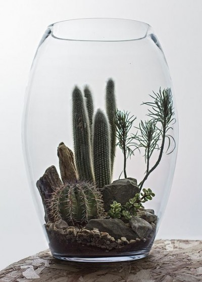 The Urban Grow – Terrarium
