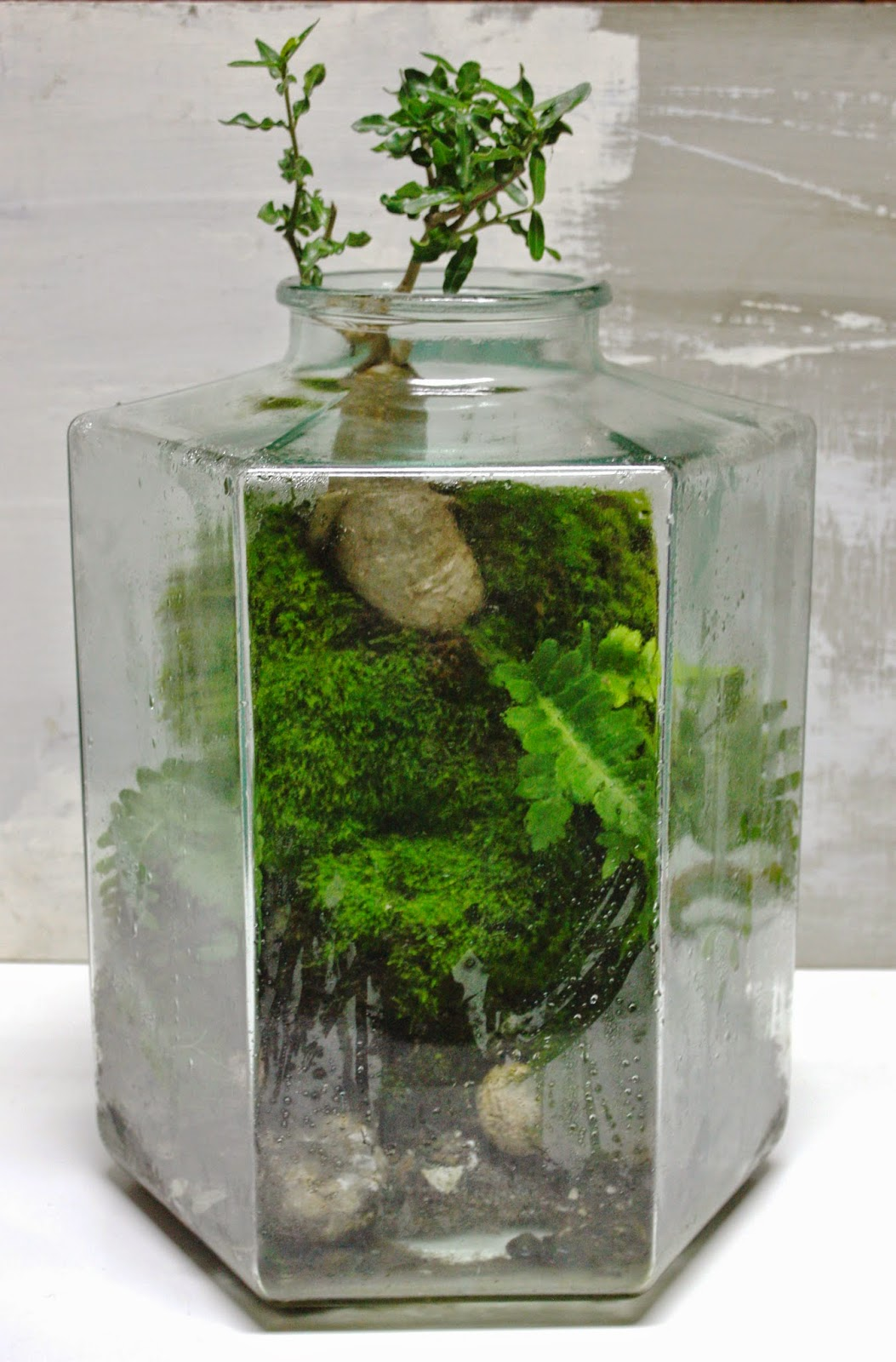 img 0001 The Urban Grow   Terrarium