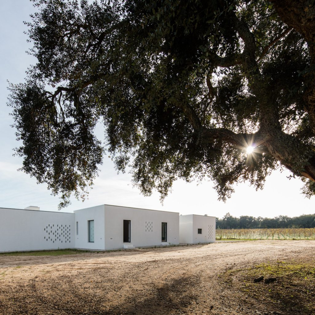 a minimal house in portugal surrounded by vines 12 1024x1024 a Minimal House in Portugal Surrounded by Vines
