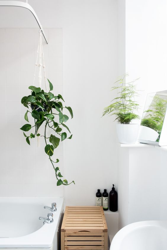 plants in bathroom Six Key Elements When Creating a Spa Like Bathroom