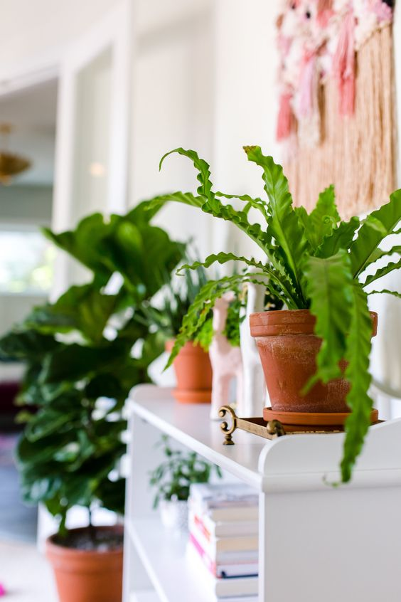 birds nest fern 7 Indoor Plants to Make Your Home a Natural Haven