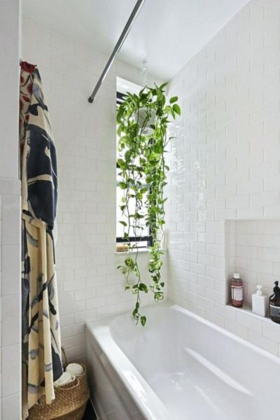What To Do When Dealing With Mold