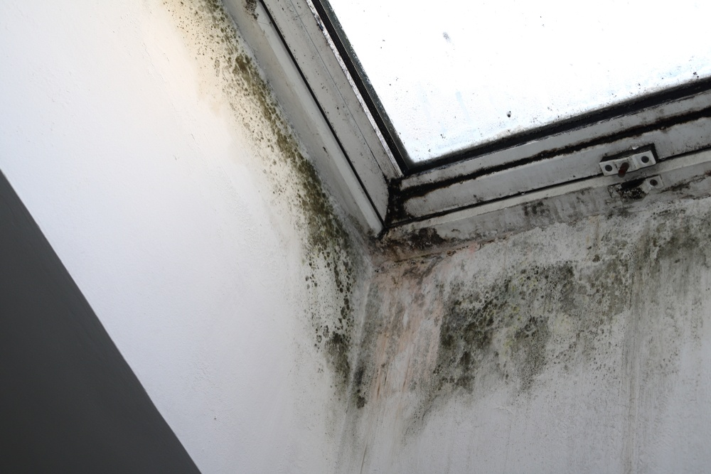 shutterstock 771824071 What To Do When Dealing With Mold