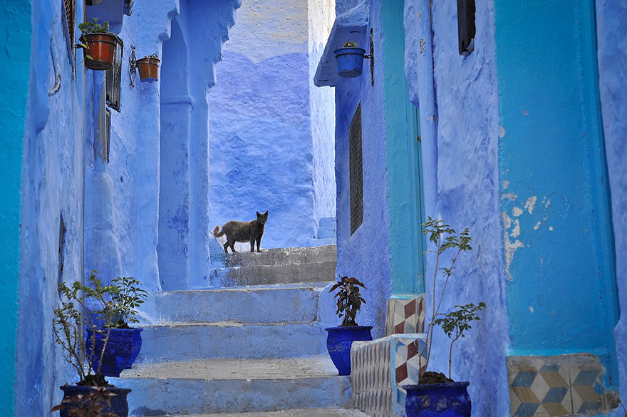 blue2 Blue, Even Green Old Town in Marocco