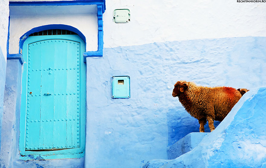 blue7 Blue, Even Green Old Town in Marocco