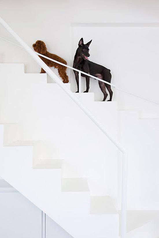 Better No Interior, Then No Dogs In Da House