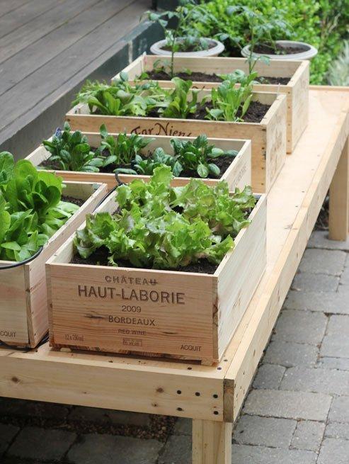 herbs in wine boxes 25 Indoor Garden Ideas