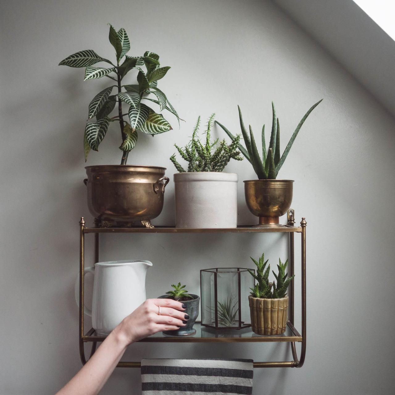 plant shelf 25 Indoor Garden Ideas