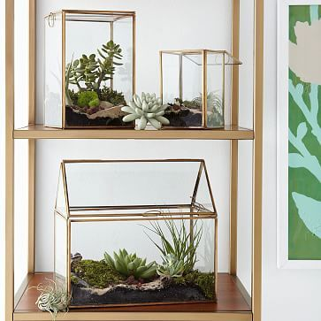 03bb74c19b22fda0cf42222ee4d03ea3 The Urban Grow   Terrarium