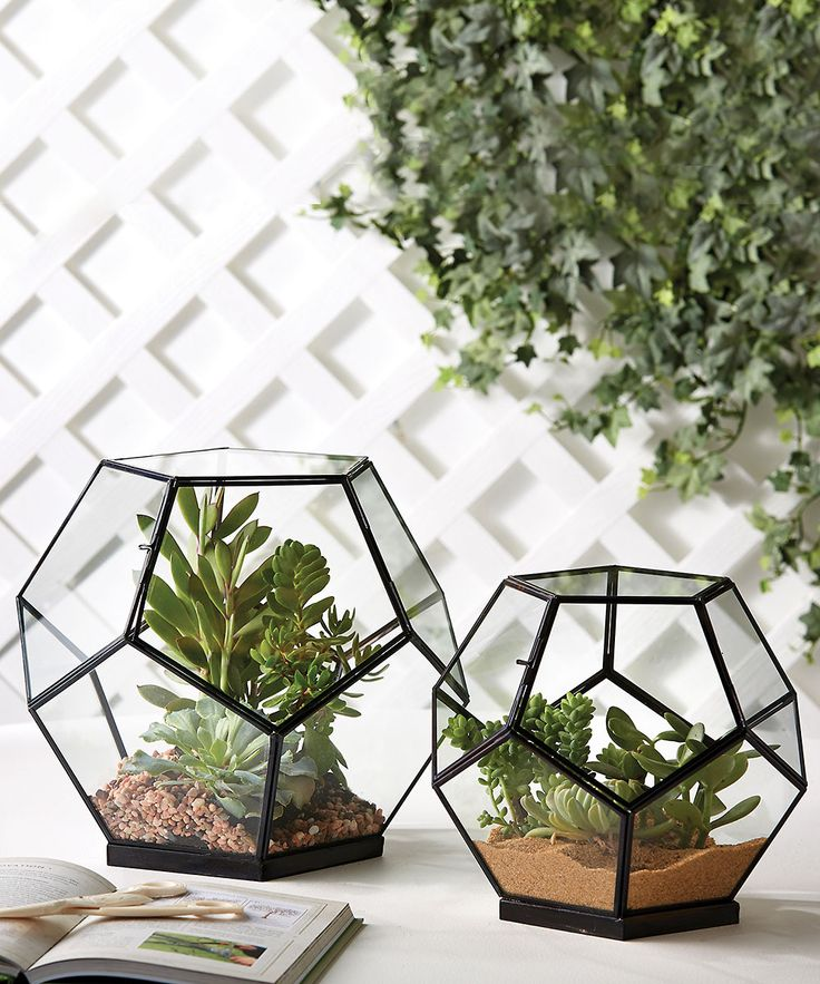 57678c0bc9dc2d3f4876c910a57d23f4 The Urban Grow   Terrarium