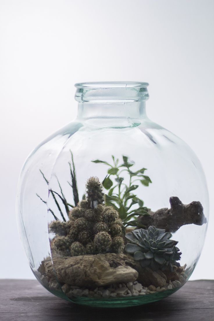 85d9b5df311ed7484cddc2938c16bb3a The Urban Grow   Terrarium