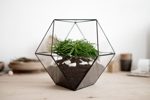 il 570xn.733088086 5vhc The Urban Grow   Terrarium