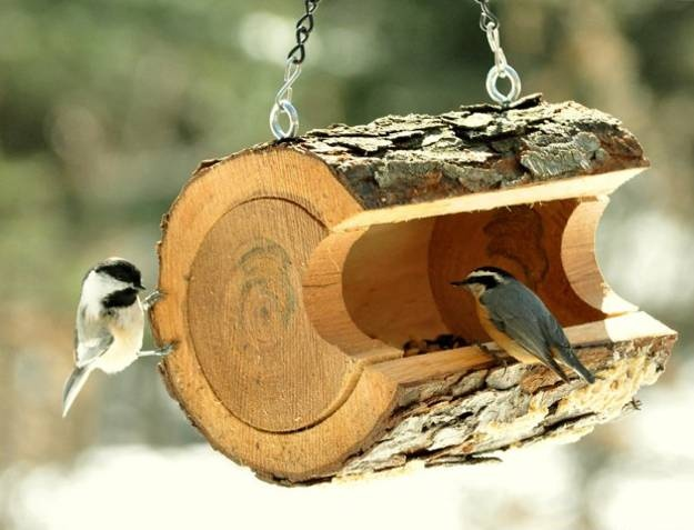 cute bird feeder 25 Best Bird Feeders To Attract Birds To Your Garden