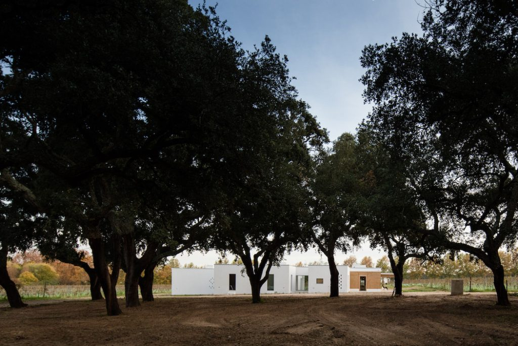 a minimal house in portugal surrounded by vines 13 1024x683 a Minimal House in Portugal Surrounded by Vines