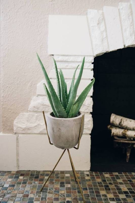 aloe vera 7 Indoor Plants to Make Your Home a Natural Haven