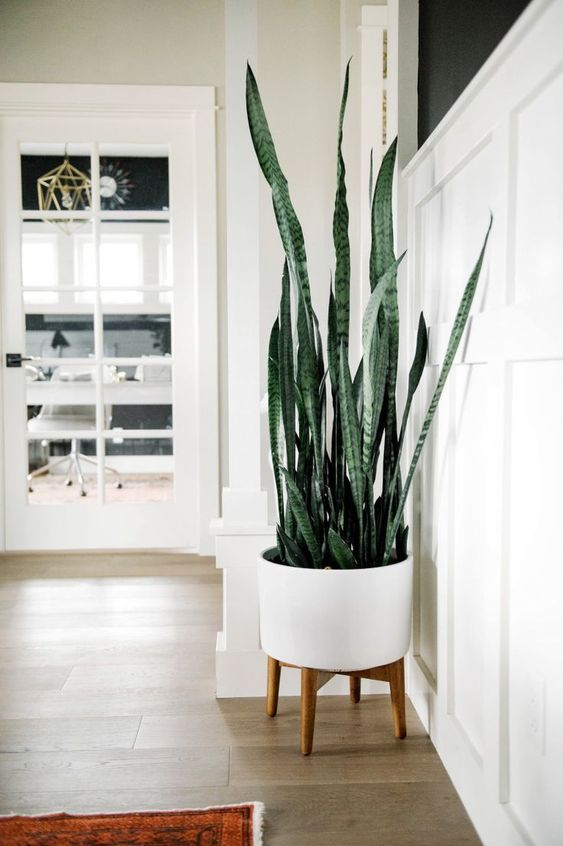 the snake plant 7 Indoor Plants to Make Your Home a Natural Haven