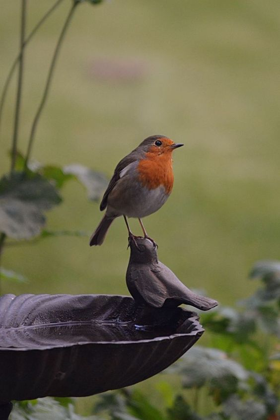 birdbath 25 Best Bird Feeders To Attract Birds To Your Garden