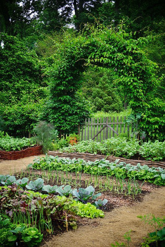 vegetable garden How To Plant A Bee Friendly Garden