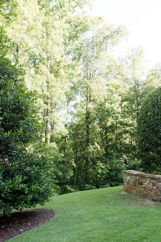 privacy trees 4 Ways to Get Your Home Ready For Rainstorms