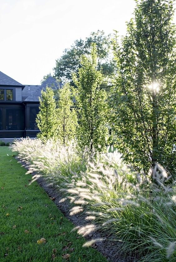 small trees Using Trees to Enhance Your Garden Design and Boost Home Value
