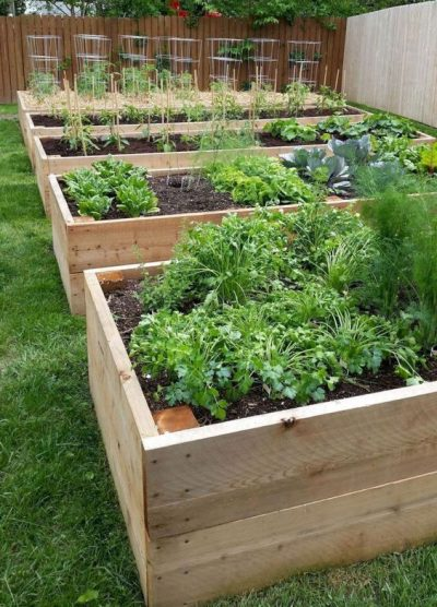 5 Sustainable Gardening Ideas: Polycarbonate Greenhouse & More