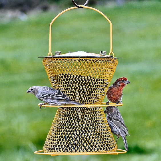 double perch feeder 25 Best Bird Feeders To Attract Birds To Your Garden