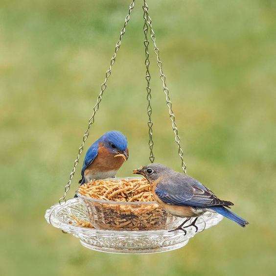 hanging glass bowl 25 Best Bird Feeders To Attract Birds To Your Garden