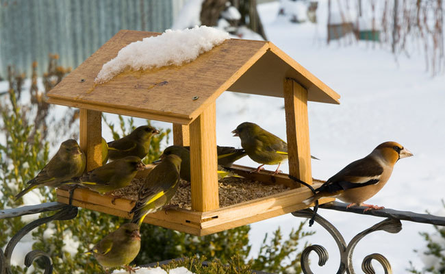 simple feeder 25 Best Bird Feeders To Attract Birds To Your Garden