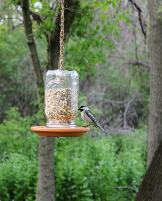 upside down jar bird feeder 25 Best Bird Feeders To Attract Birds To Your Garden