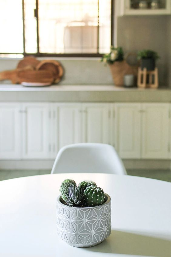 succulents and cacti pot 7 Indoor Plants That Give Life To Your Interior Design