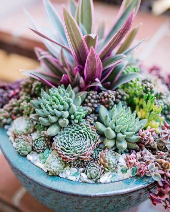 succulents and cacti 7 Indoor Plants That Give Life To Your Interior Design