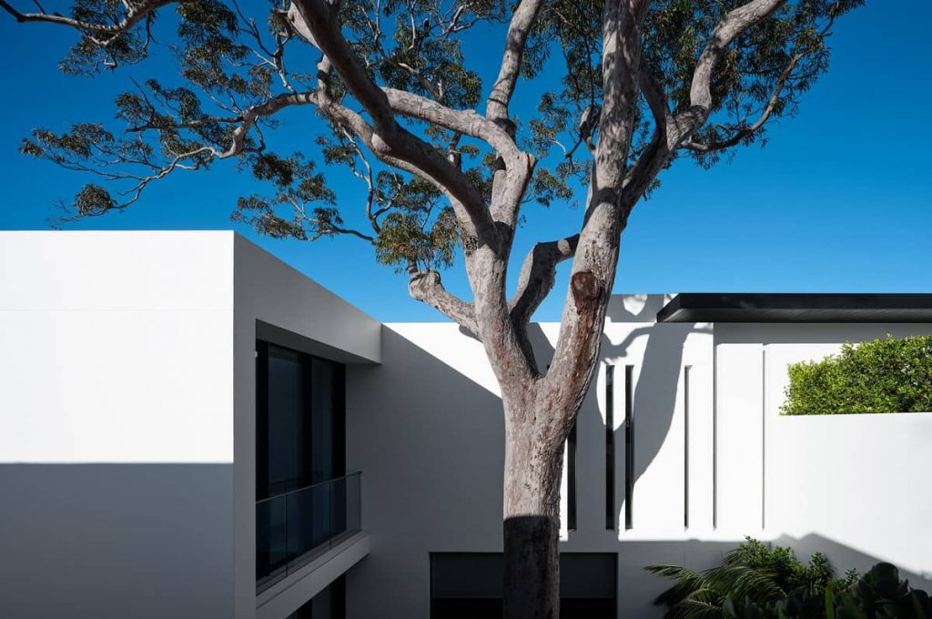 A House Designed Around the Sculptural Form Of a Large Angophora Tree