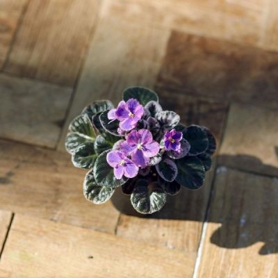 5 Best Indoor Flowers and Ways to Incorporate Greenery Into Your Home