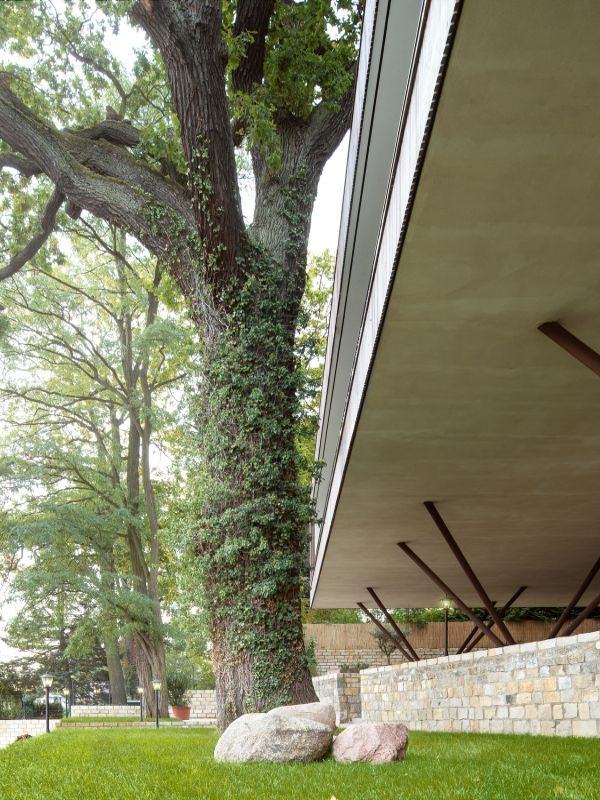 huge maple tree Haus am See by Carlos Zwick