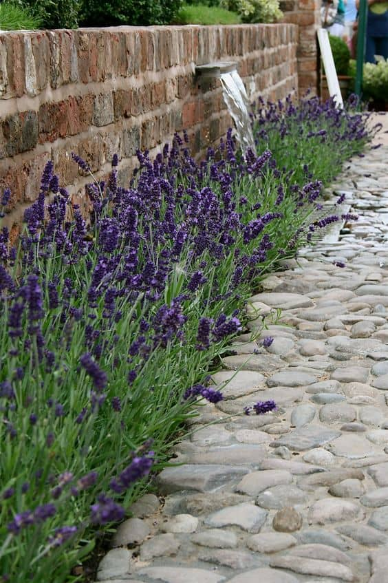 lavender These 10 Summer Plants and Flowers Will Turn Your Terrace Into a Beautiful Garden